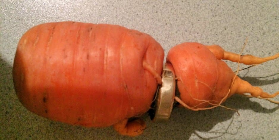 Engagement Ring Found In Carrot